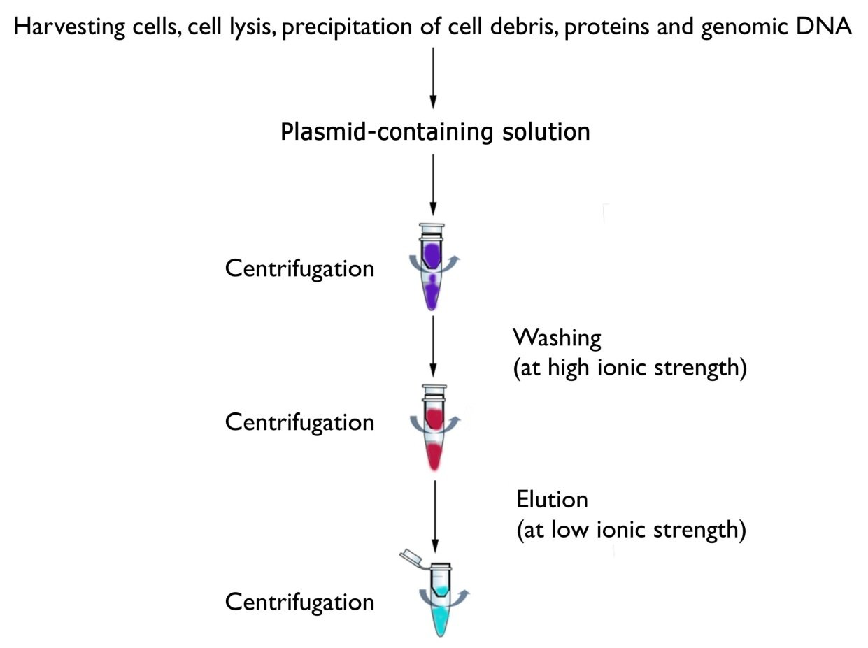 Plasmid Isolation Mybiosource Learning Center
