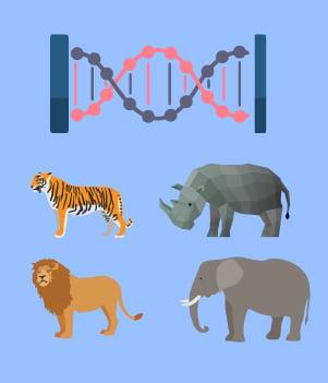 8 клонирование животных, находящихся под угрозой исчезновения