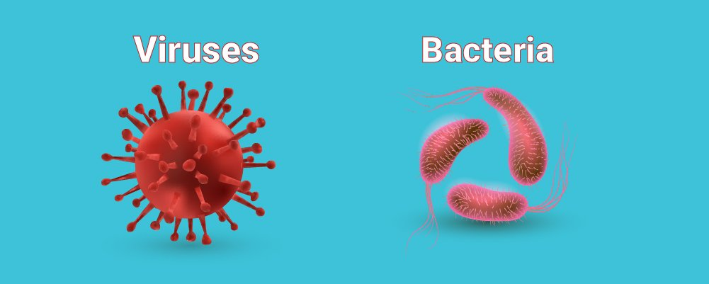 A Virus and a Bacteria side by side