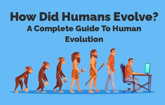 How Did Humans Evolve? A Complete Guide To Human Evolution