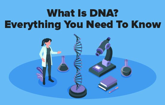 What Is DNA? Everything You Need To Know